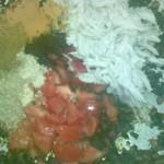 اضافة الدجاج المقطع والطماطم والبهارات الي البصل  - 152967