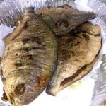 السمك بعد قليه في الزيت