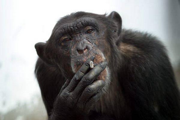 اجمل واحلى مجموعة صور القرد للعام 2015