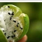 حشو الليمون بالملح وحبة البركة