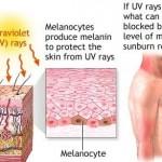 فيتامين E لعلاج حروق الشمس على البشرة  - 152959