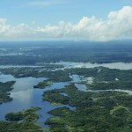 Aerial view of the Amazon Rainforest - 177382