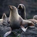 حيوانات بحرية مهددة بالانقراض