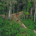 Uncontacted indigenous tribe in the brazilian - 177386