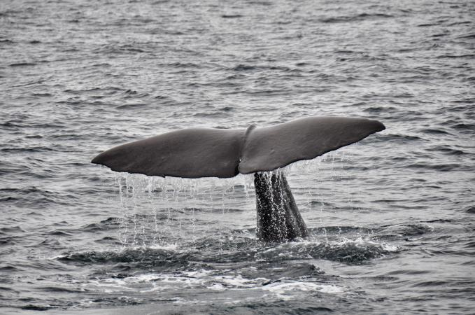 Whale-Watching At Kaikoura