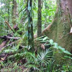 view of Rain Forest near Daintree, Queensland, Australia - 177387