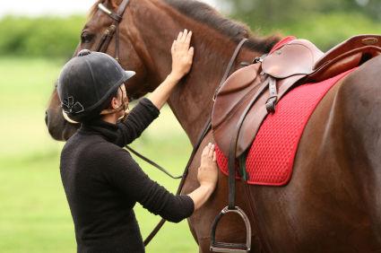 يمكن أن يكون الحصان صديق هادئ