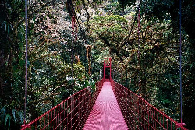 الأماكن السياحية Monteverde-Cloud-For