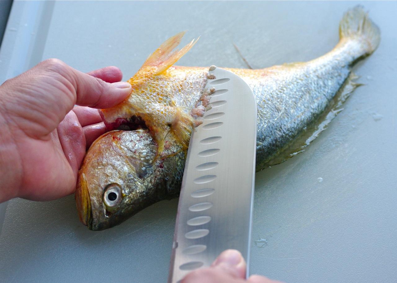 تنظيف السمك الهامور
