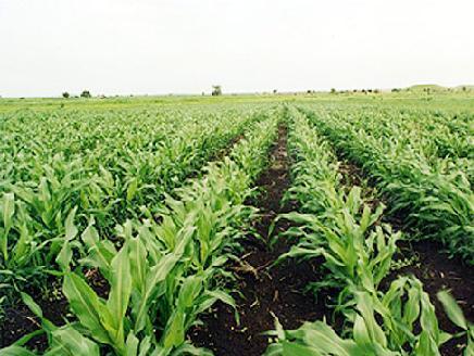 نمو الزراعة