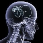الساعة البيولوجية في جسم الإنسان