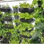 كيفية الزراعة في العلب البلاستيكية