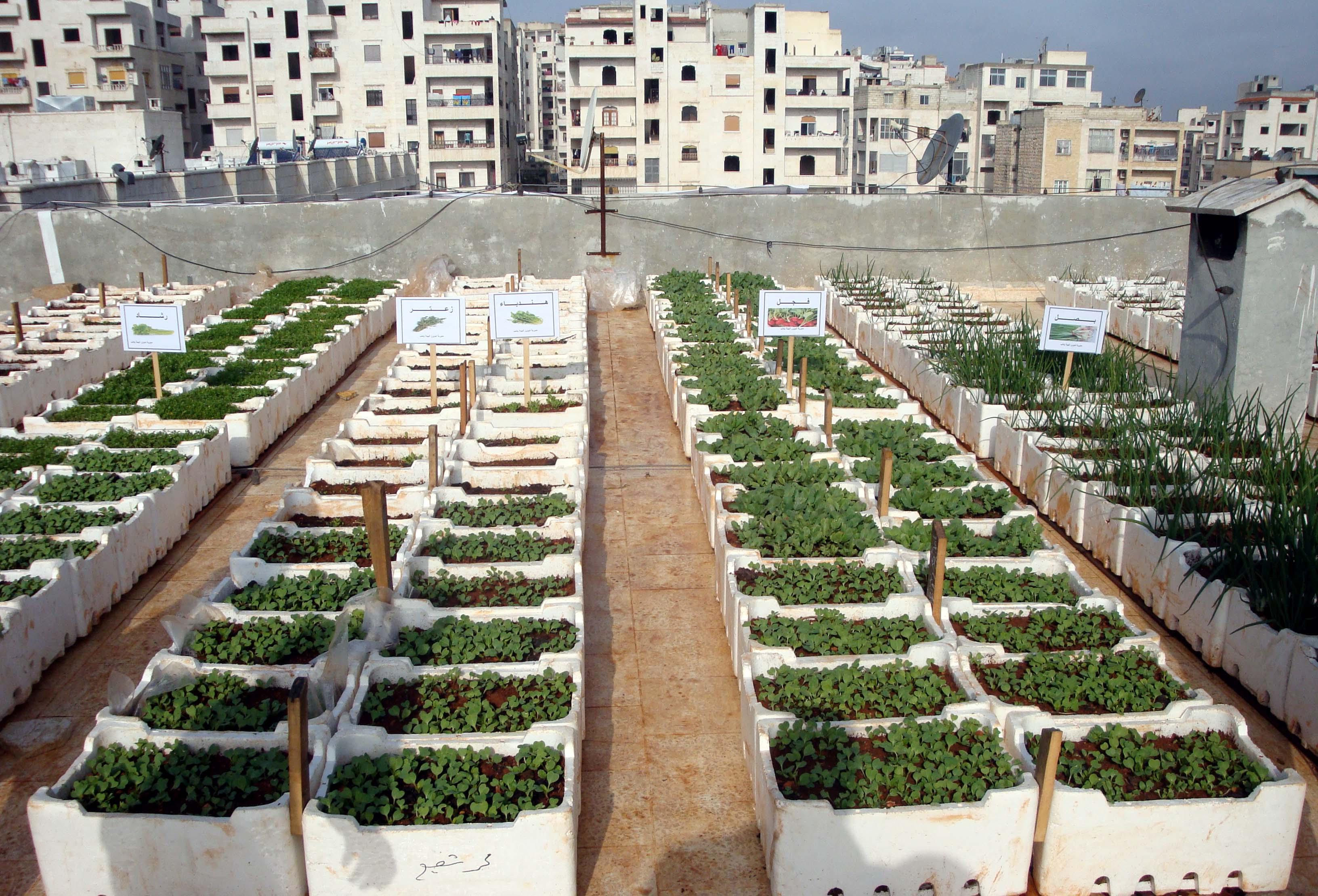 ����� ������ �������� ������ مشروع-زراعة-الخضروات-فوق-سطح-المنزل.jpg