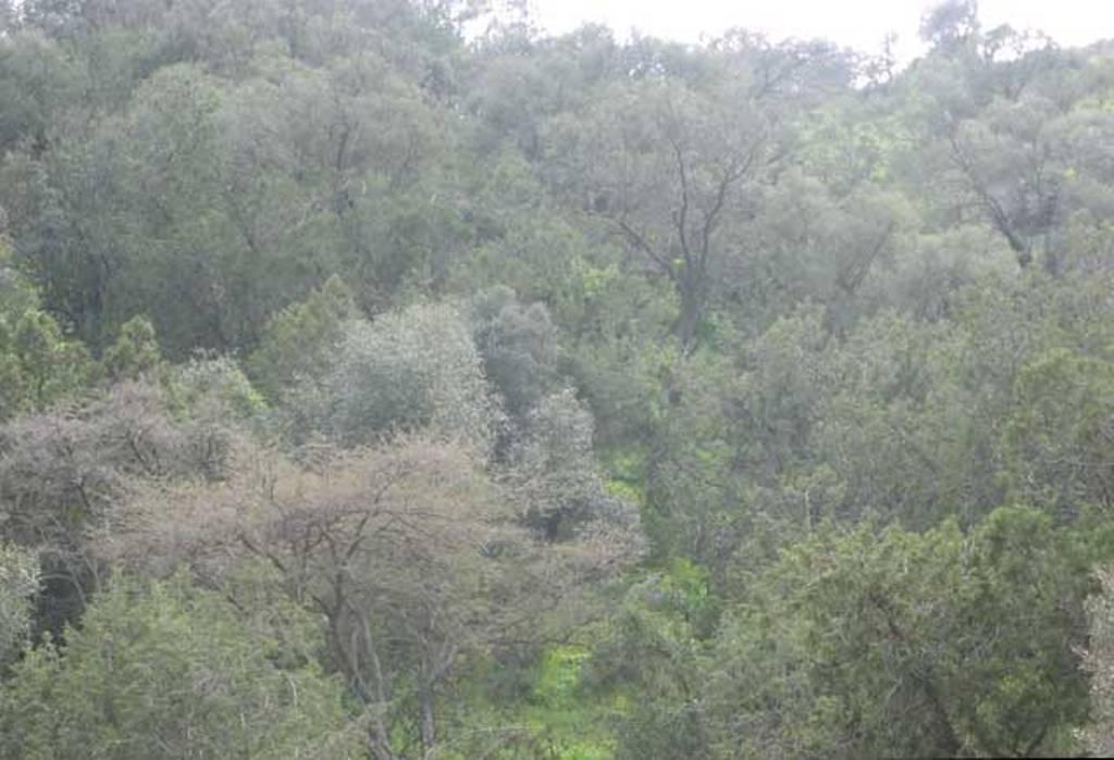 غابة عمضان