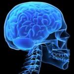 حقائق عن دماغ الإنسان