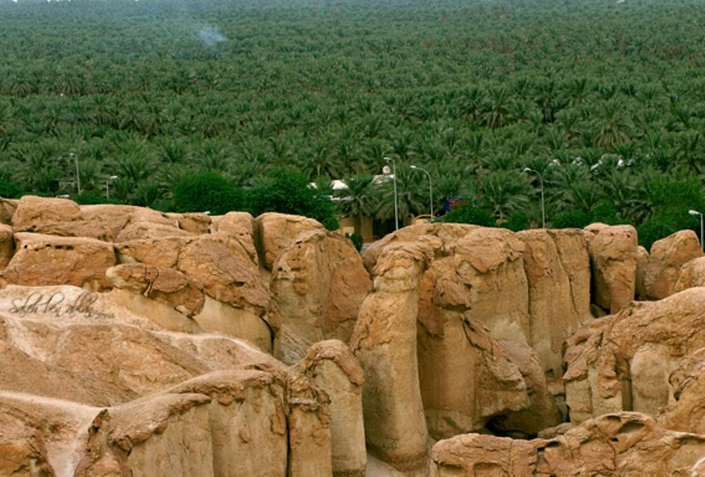 بالصور جبل القارة .. الاحساء بالمملكة السعودية Palm-trees-on-the-mo