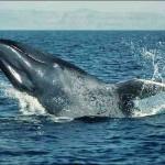 اكبر حيوان فى العالم - 207609
