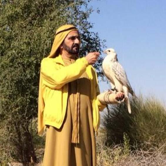 الشيخ زايد وصيد الصقور