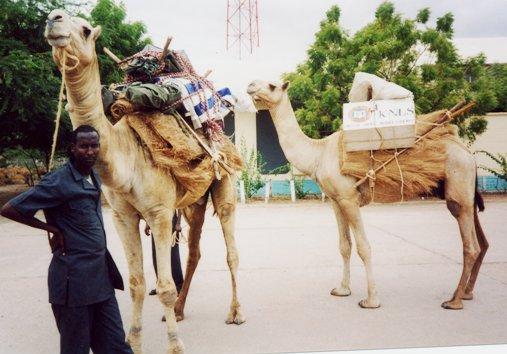 The Kenyan Camel Library