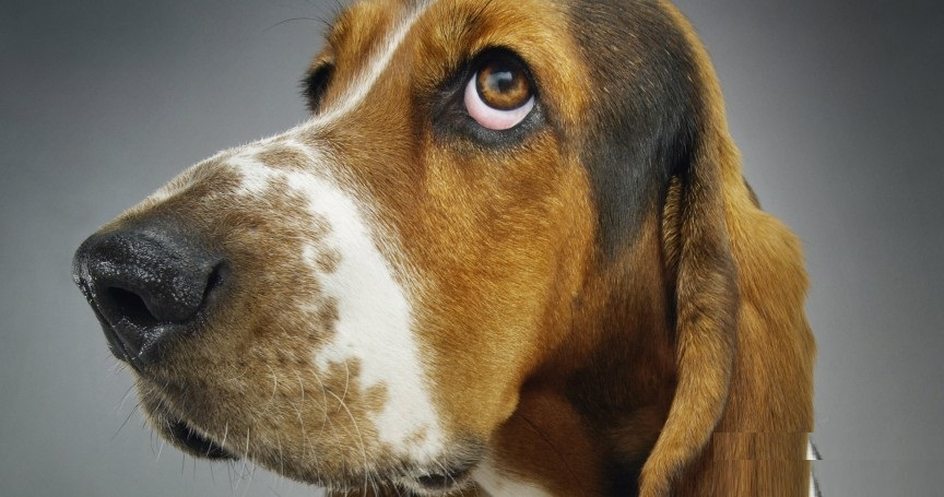 The World's 10 Least Intelligent Dog Breeds