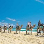 camel-safari - 208570