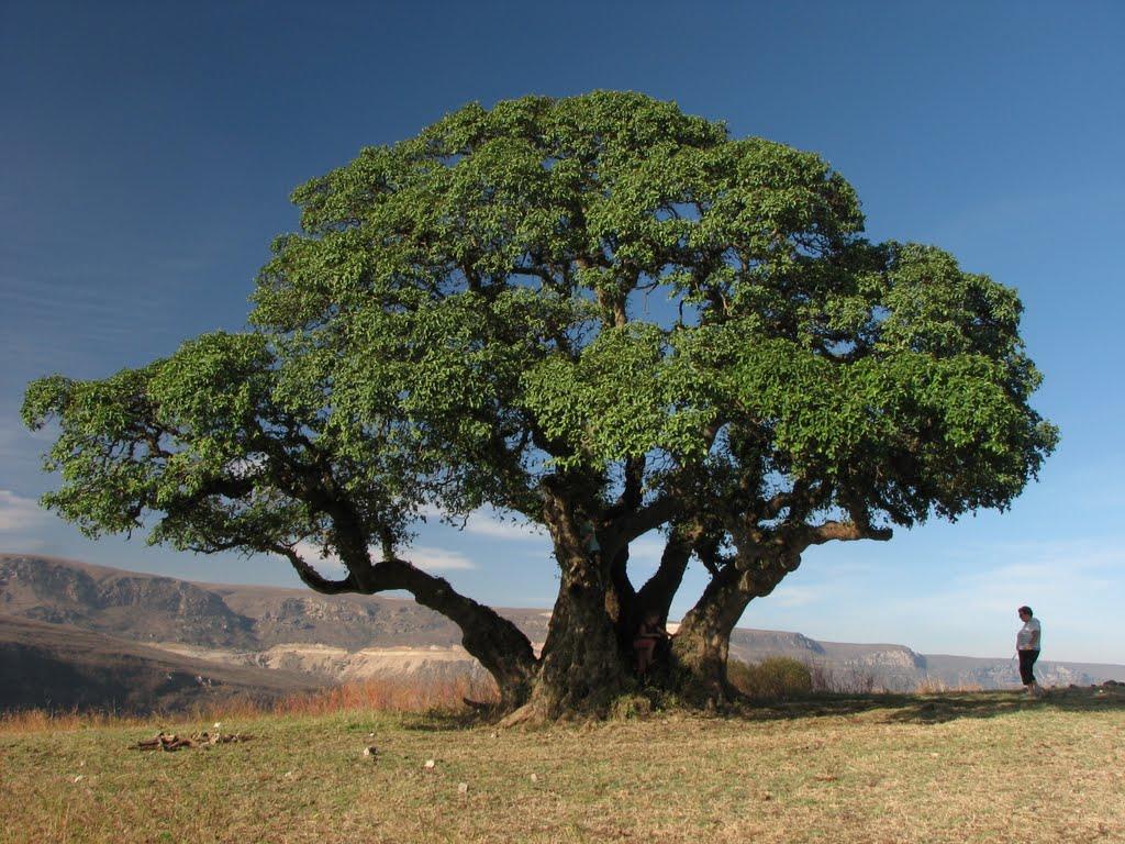 the title Dhofar plateau