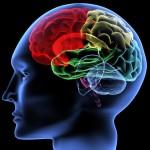 هل الذكاء موهبة في الإنسان أم أمر مكتسب