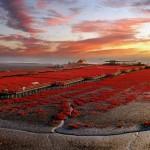 أغرب شواطئ العالم (الشاطئ الأحمر)
