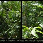 كيف تبني غابة في أي مكان