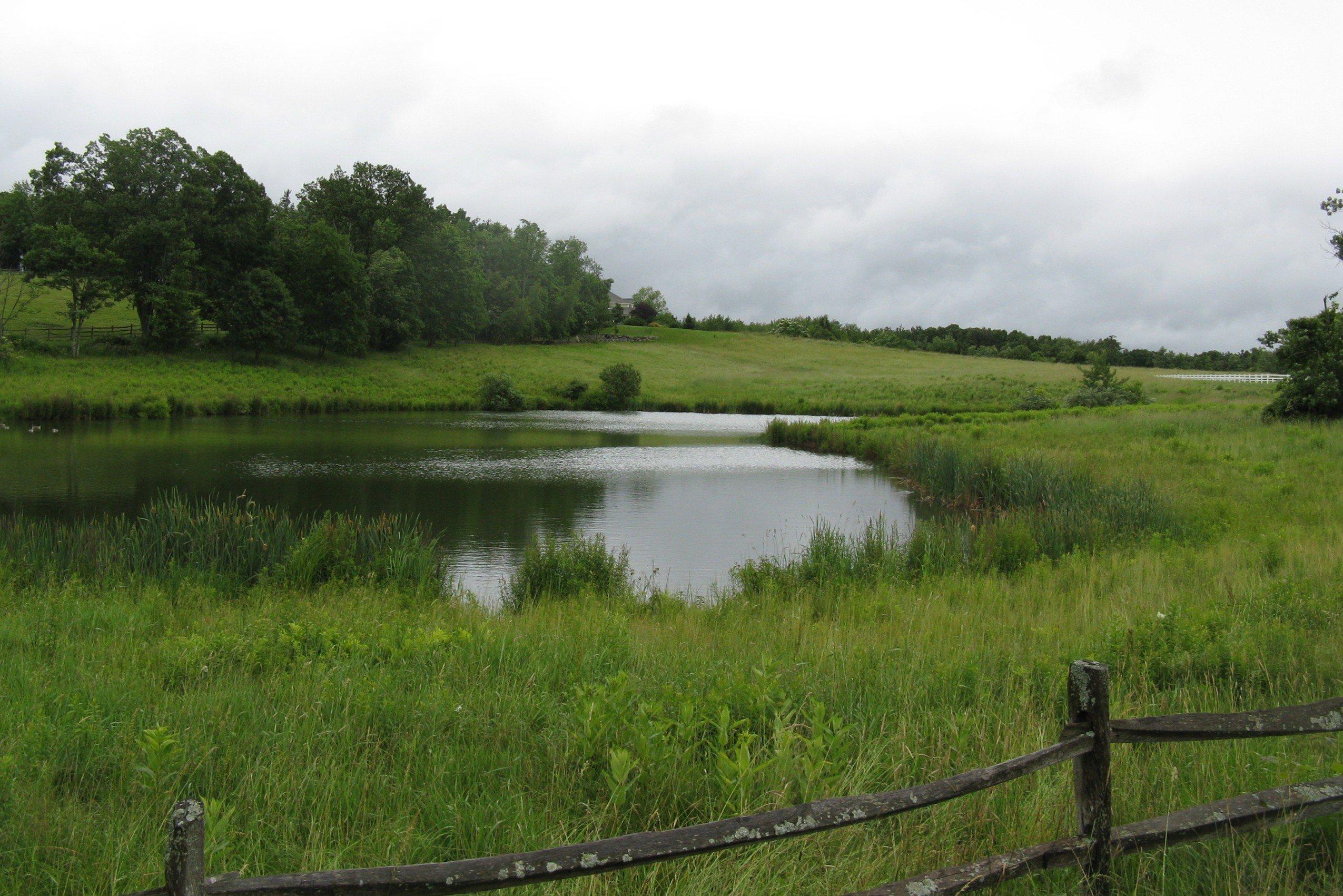 نهر بركة وروافده بالصور Pond_off_Still_River_Rd_Still_River_MA