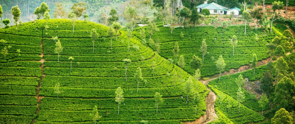 Sri Lanka Luxury Holidays