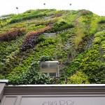 تحويل مبنى كئيب المنظر إلى حديقة رائعة