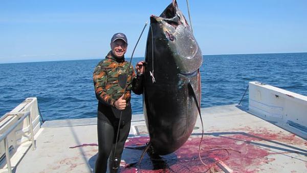 Image result for سمكة تونة الزعنفة الزرقاء