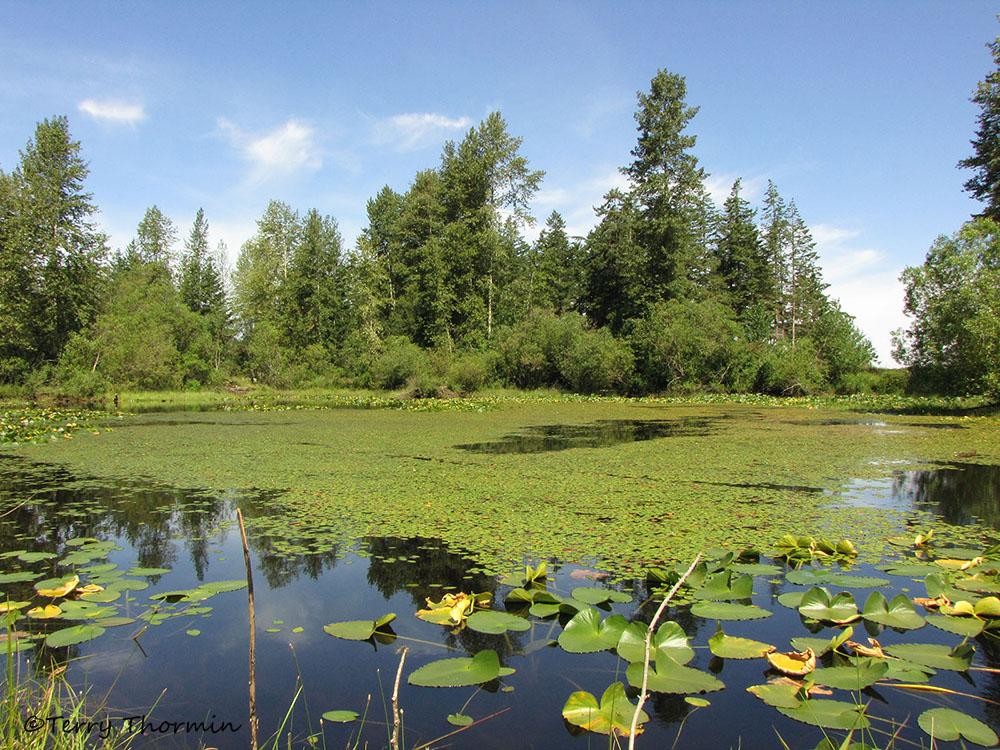 نهر بركة وروافده بالصور Little-river-pond-west