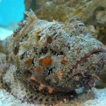 The Stonefish - 218186
