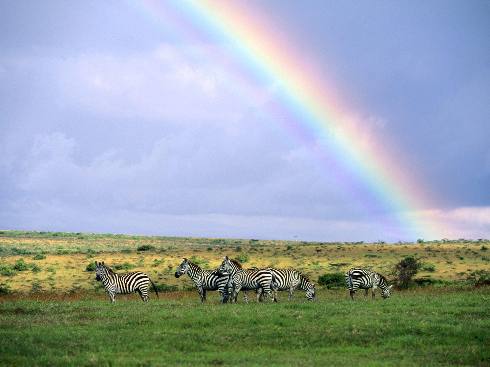 the Storm Kenya Africa