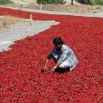 طريق الفلفل الاحمر في تركيا