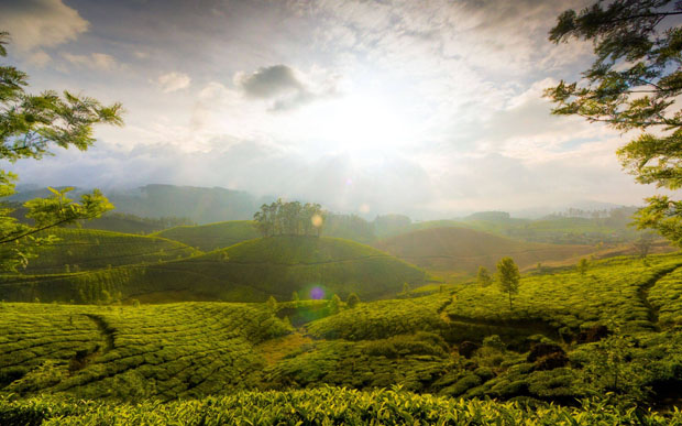 Tea garden hill of Munnar, India