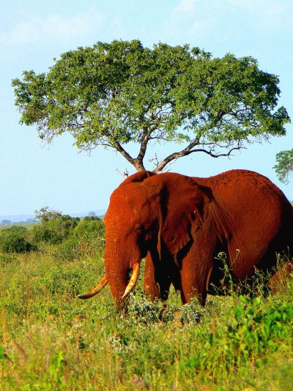 الفيل الأحمر في كينيا The-Ark-in-Space-has