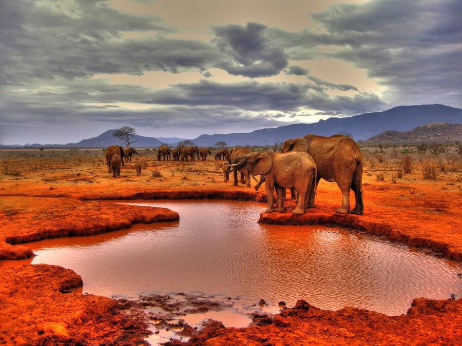 الفيل الأحمر في كينيا The-Red-Elephants-of