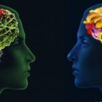 الدماغ والطعام - 228269