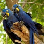 طيور مهددة بالانقراض