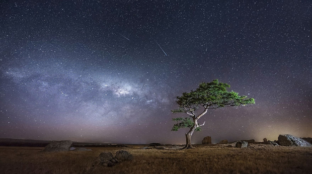 A starry night with this lone tree at Dog Rocks near Geelong