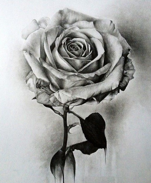 Fabules flower drawing