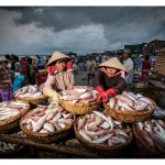 Fresh fish for market - 240707