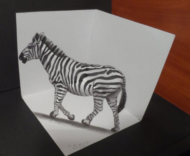 Zebra  pencil drawings