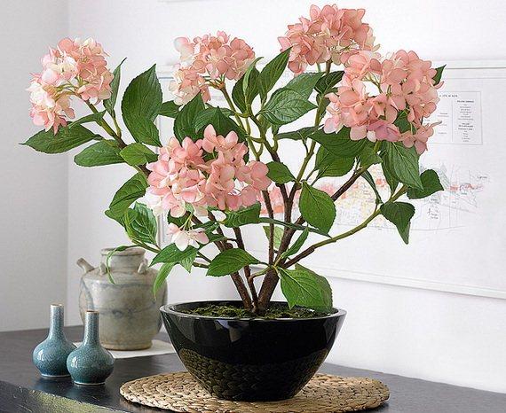 نتيجة بحث الصور عن نباتات الظل