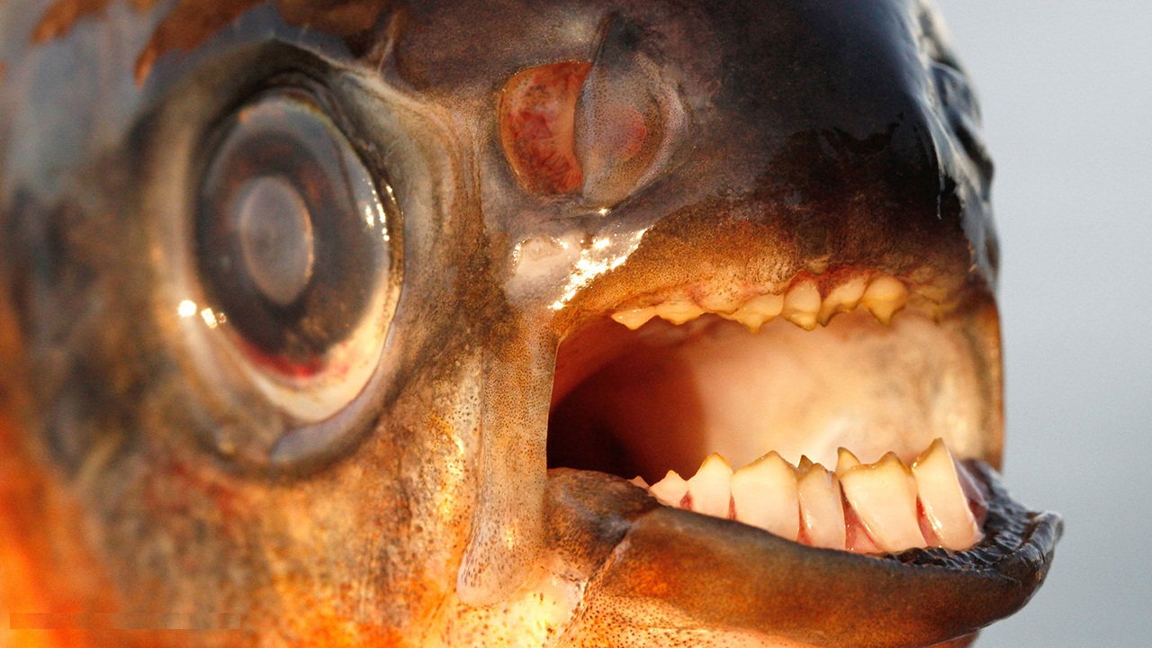 The Scariest Teeth in The Animal Kingdom