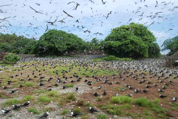 The restoration is expected to be a boon for the atoll's wildlife
