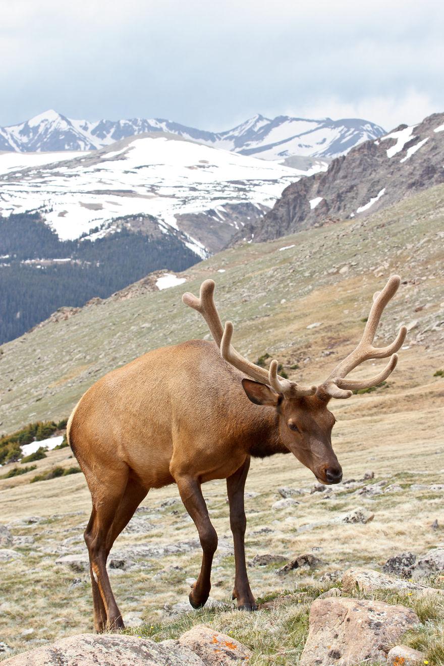 المعالم السياحية في جبال روكي الجنوبية Wild-in-Beautiful-Co